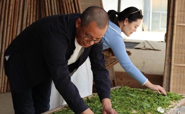 和刘师傅一起学习白茶的萎凋摊晾